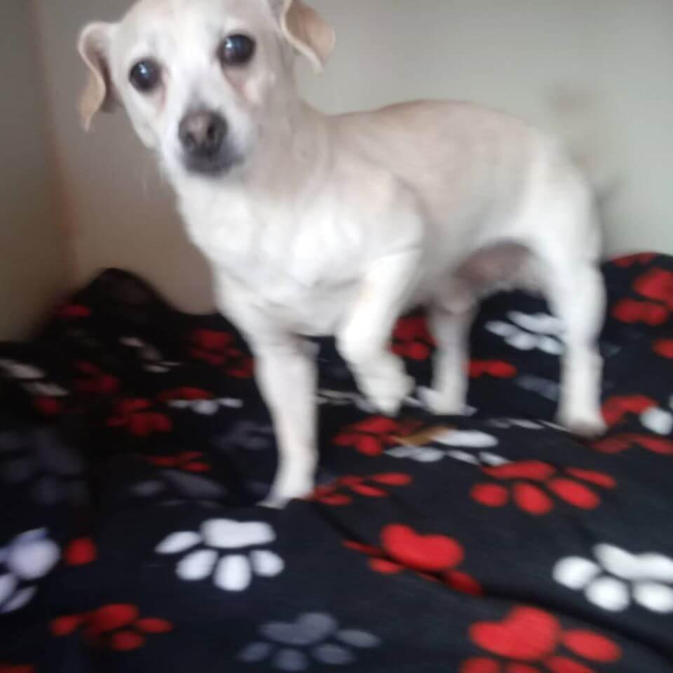white dog on dog paw blanket