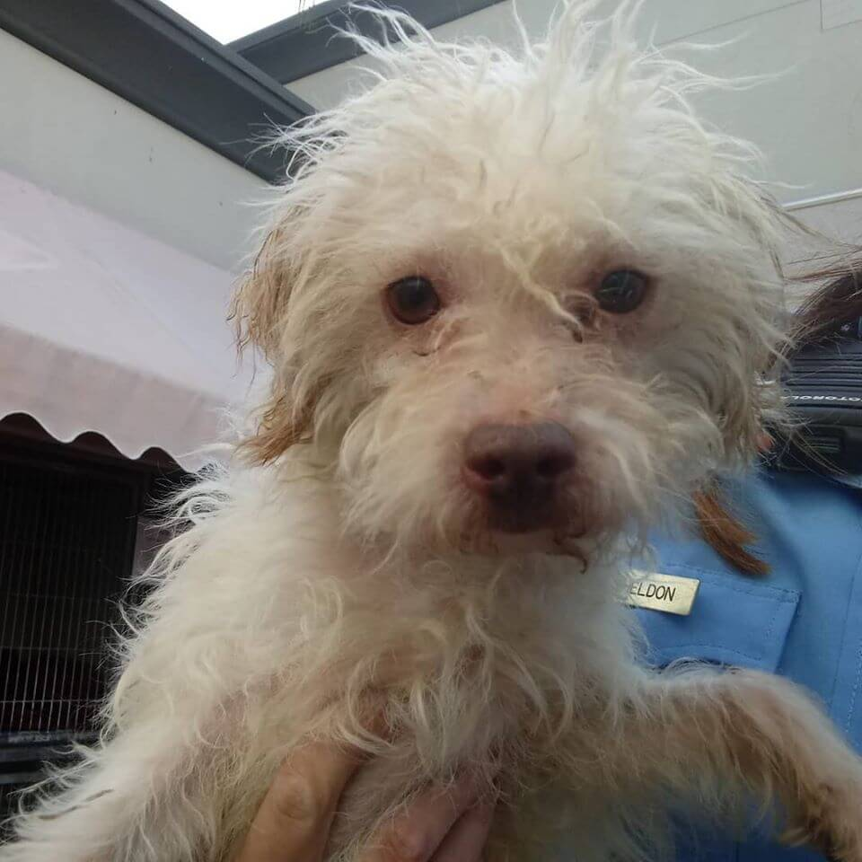 lost white male dog front carried one hand on chest