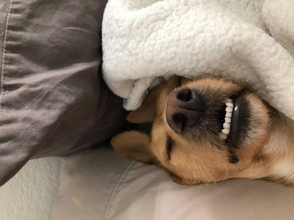 sleepy head under blanket with white clean teeth