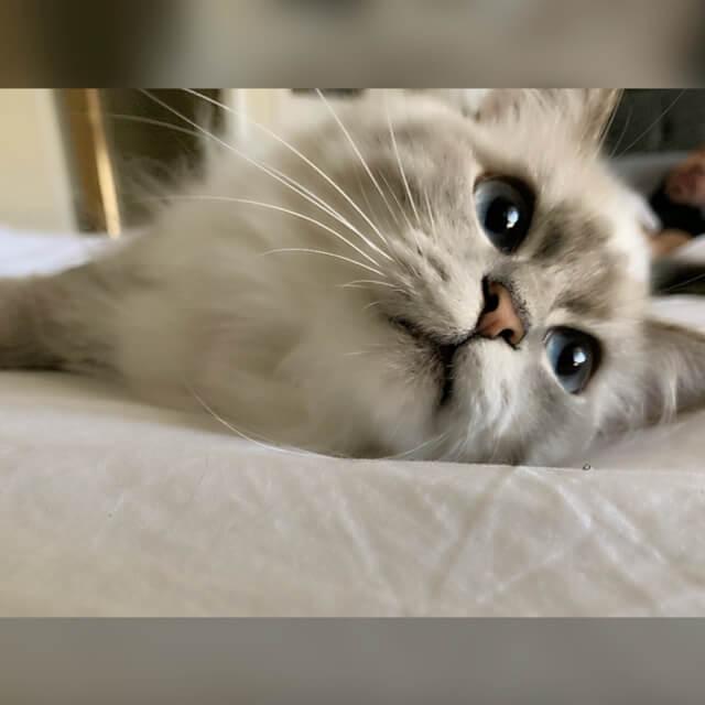 wants to get pet luna lie down