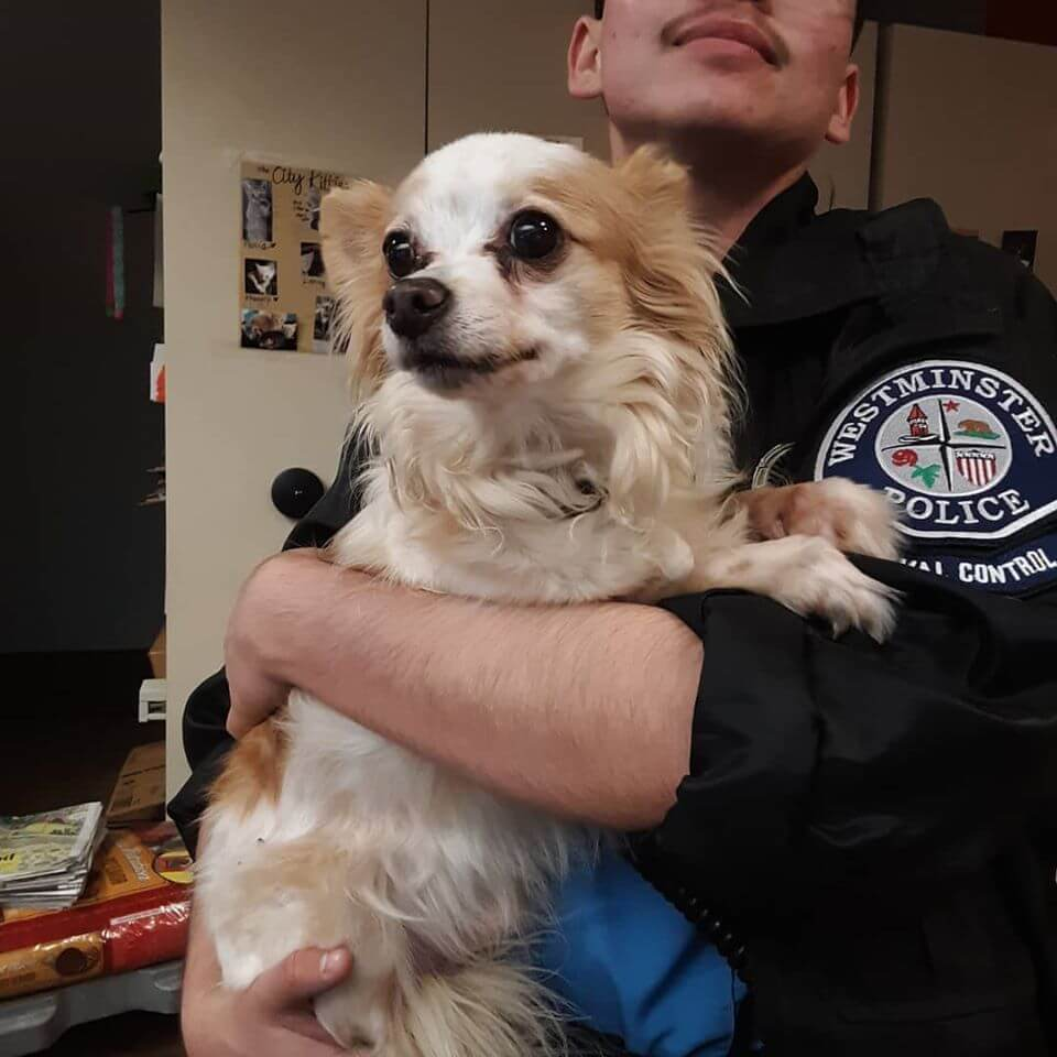 dog lost with police