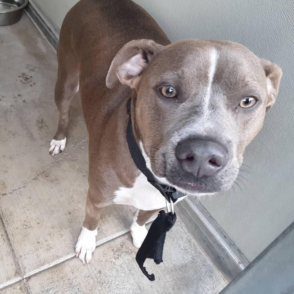 brown-gray dog lost bolsa and ward