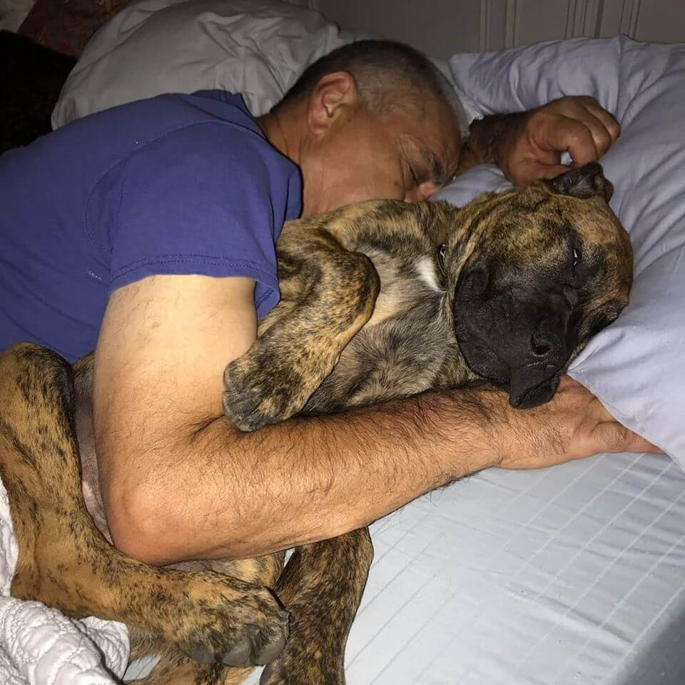fiji sleeping with owner on bed spooning