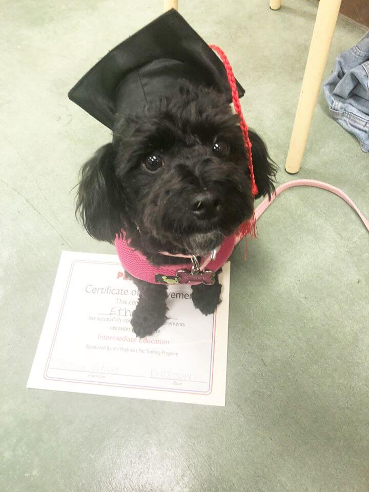 ethel black puppy with toga hat and certificate