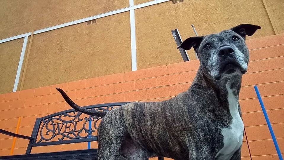 senior saturday bambam looking for home beside of bench