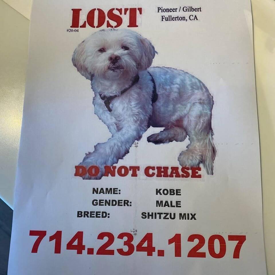 kobe lost dog poster