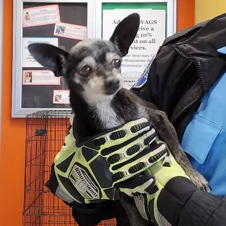 fearful old girl dog black and white jasmine lane & syracuse ave stanton gloves green and black