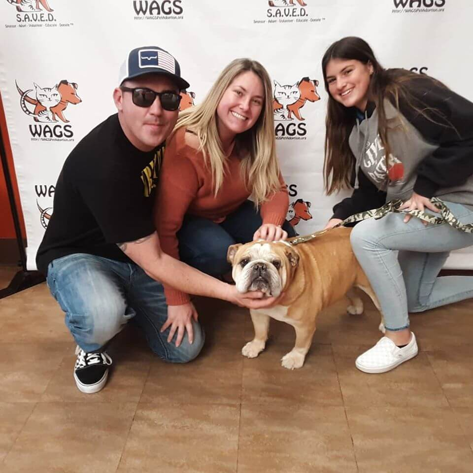 bull dog adopted by family of 3 with daughter