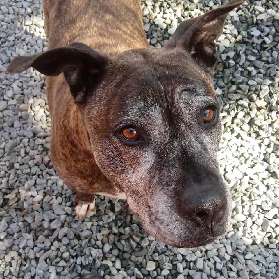 patiently waiting for family adoption WAGS fb share rescued